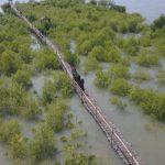 Foto aerial Pusat Restorasi dan Pembelajaran Mangrove Mengaree (2)